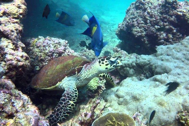 Dimaniyat Island from Muscat, Mascate, OMAN