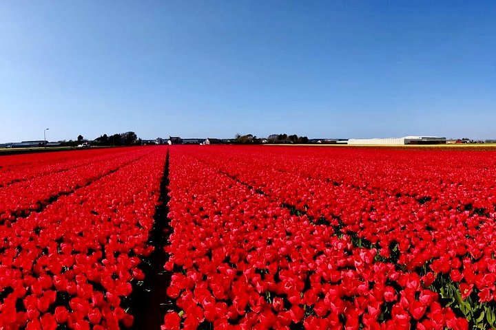 Guided Private Tour to Keukenhof from Amsterdam, The Hague - 7 Hours, Amsterdam, HOLLAND