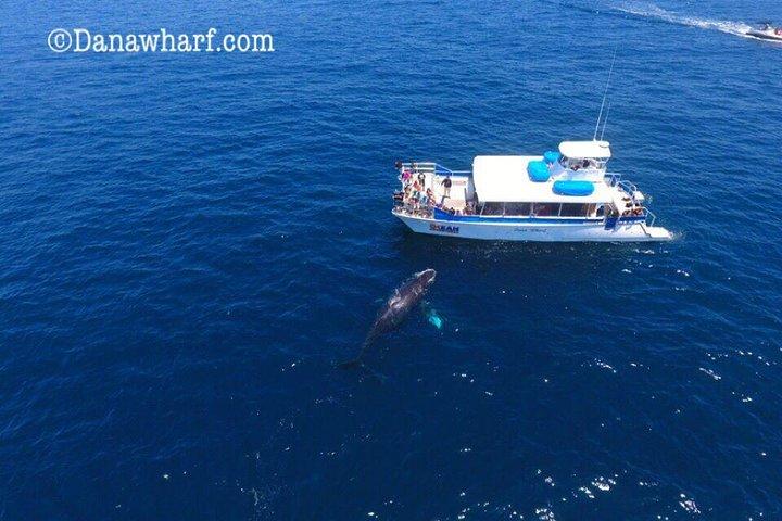 Whale Watching Excursion in Dana Point, Dana Point, CA, ESTADOS UNIDOS