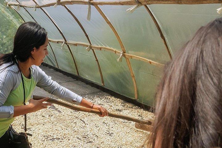 Guatapé & Coffee farm, all in one day, Medellin, COLOMBIA