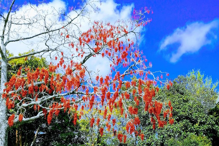 Private Shore Excursion: Full-Day Bay of Islands Tour, Bahia de Islas, NUEVA ZELANDIA