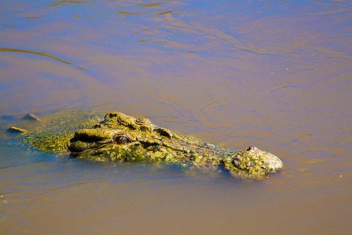 Jumping Crocs & Nature Adventure Cruise from Darwin, Darwin, AUSTRALIA