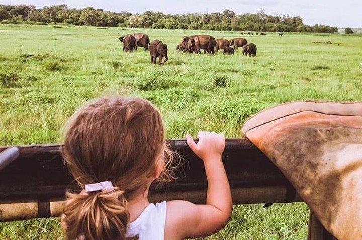 2 Day Tour to Sigiriya & Minneriya safari From Colombo, Colombo, Sri Lanka