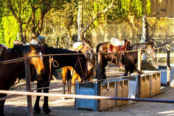 Sunset Horseback Riding, Mendoza, ARGENTINA