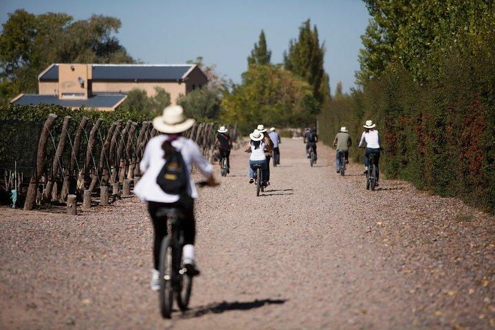 Bike Tour in Mendoza Wine Country, Mendoza, ARGENTINA