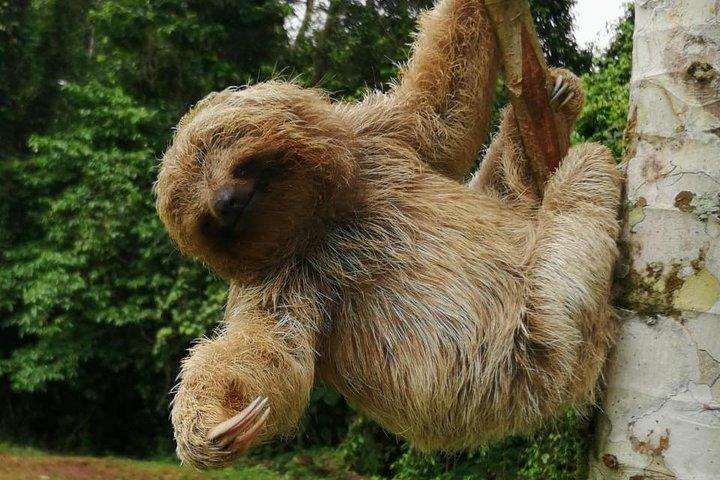 Sloth's & Miravalles volcano, ,