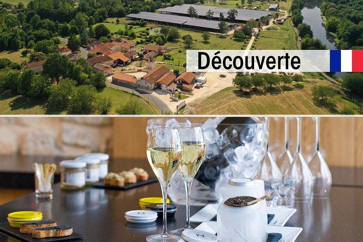 Sturgeon Fish-Farm Visit and Caviar Discovery Tasting in Neuvic, Bergerac, FRANCIA