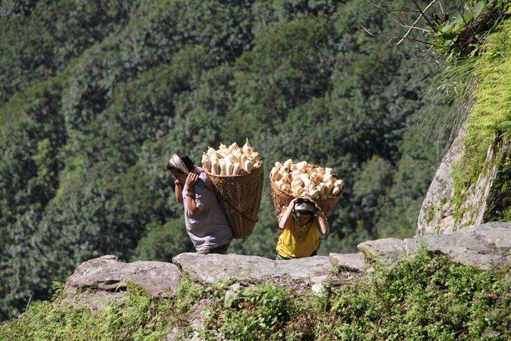 Annapurna Mini Trek, Katmandu, Nepal
