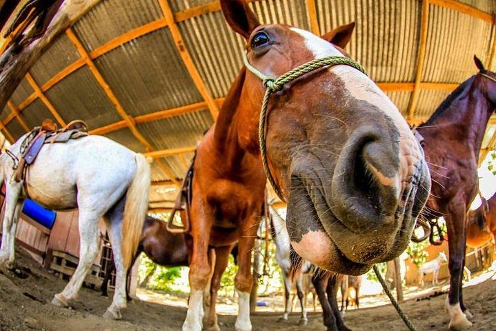 Horseback, Zipline and Rappel Combo Tour Jaco, Jaco, COSTA RICA