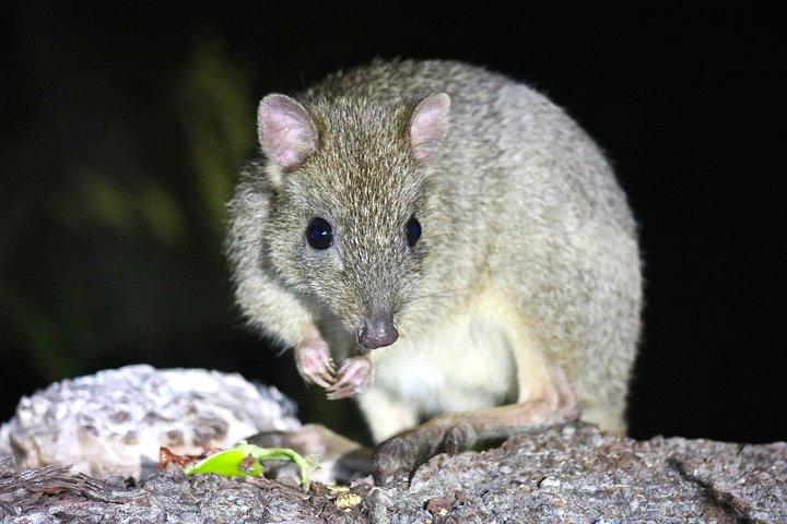 Nocturnal Wildlife Tour from Busselton or Dunsborough, Busselton, AUSTRALIA