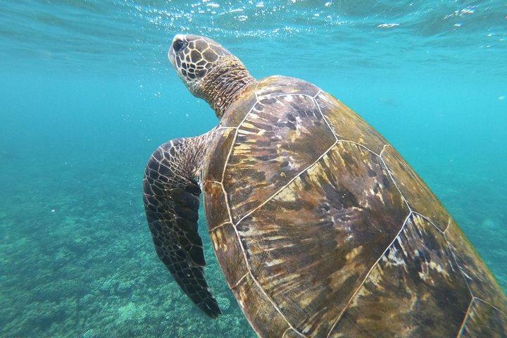 Cruises to Daymaniyat & Snorkeling, Mascate, OMAN