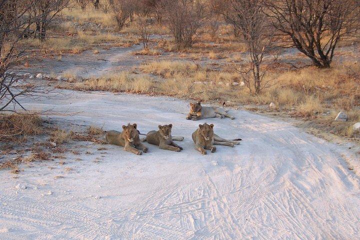 12-Day Desert and Delta Express Adventure Accommodated Tour from Swakopmund, Swakopmund, NAMIBIA