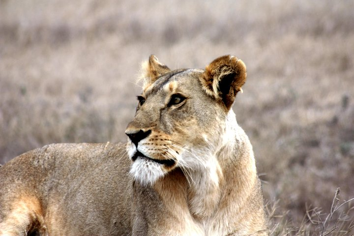 7-Day African Insight Adventure Accommodated Tour from Livingstone, Livingstone, Zimbábue