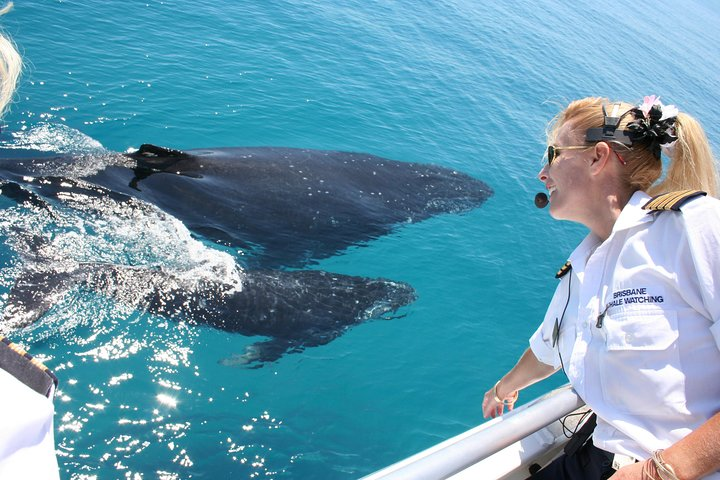 Whale Watching Cruise from Redcliffe, Brisbane or the Sunshine Coast, ,