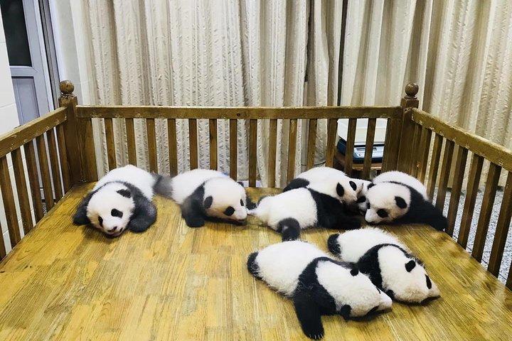 One Day Trip to Chengdu Panda Base and Leshan Buddha Tour, Chengdu, CHINA