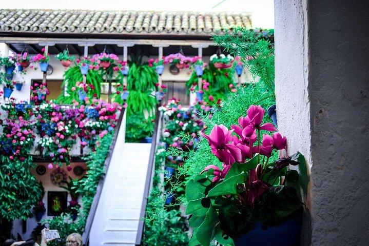 Patios tour in Cordoba, Cordoba , ESPAÑA