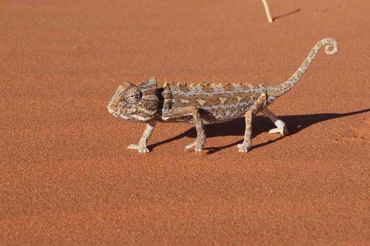 Half Day Namib Desert, Swakopmund, NAMIBIA