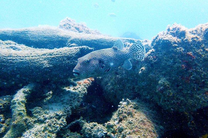 Wave Break Island Scuba Diving on the Gold Coast, Gold Coast, AUSTRALIA