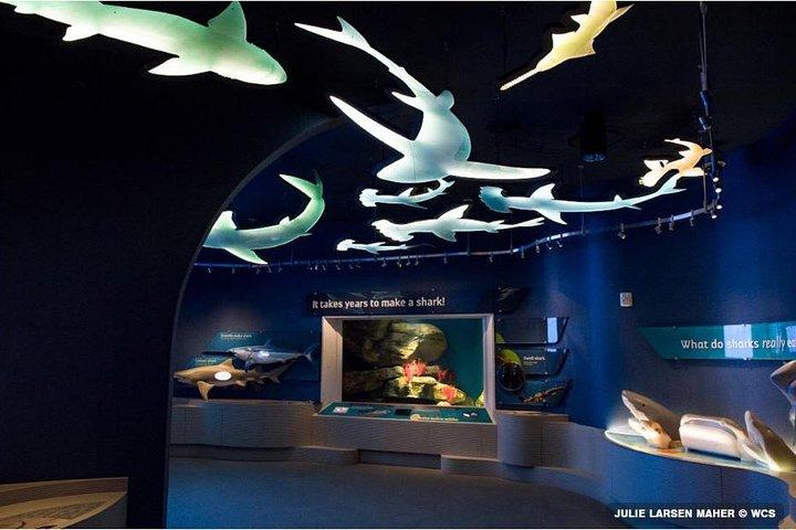 New York Aquarium Admission Tickets, Brooklyn, NY, UNITED STATES