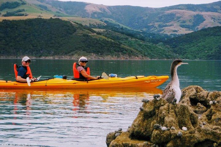 Shore Excursion: Guided Sea Kayaking through Akaroa Marine Reserve, Akaroa, NUEVA ZELANDIA
