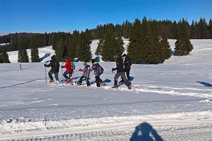 SnowShoe Tour near Brasov, Brasov, RUMANIA