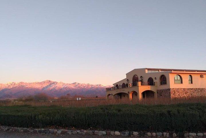 Valle de Uco, viñedos de altitud, Mendoza, ARGENTINA