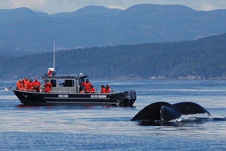 Ultimate Marine Whale & Wildlife Tour, Isla de Vancouver, CANADA
