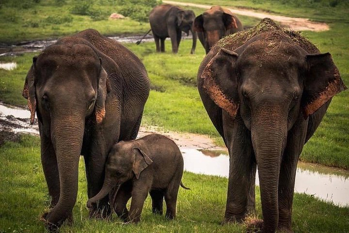 Udawalawe National Park Safari with Private Driver-Jeep and Enter ticket, ,
