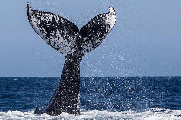 Private Zodiac Whale Watching Adventure from Victoria, Isla de Vancouver, CANADA