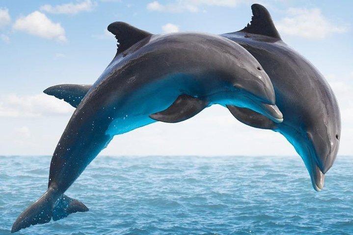 Side:Dolphin Island Boat Trip in Side, Side, TURQUIA