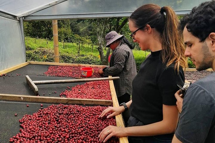 Specialty Coffee 101, History - Processing - Professional Cupping and More!, Boquete, Panama