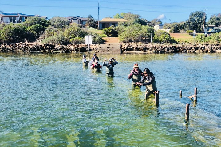 Oyster Farm and Tasting Tour with Hotel Pick-up and return from Port Lincoln, Port Lincoln, Austrália