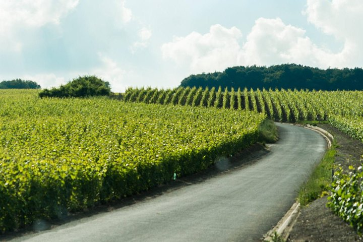 Champagne Day Trip with Moet&Chandon, Reims Cathedral & Family Winery from Paris, Paris, França