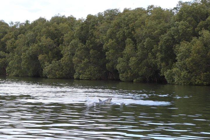 Manaus: Half Day to Boto Cor de Rosa, Manaus, BRASIL