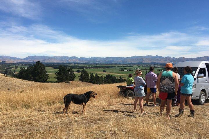 Wine Tasting & Sheep Farm Tour, Canterbury, New Zealand