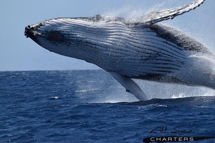 Whale Watching Busselton, Busselton, AUSTRALIA