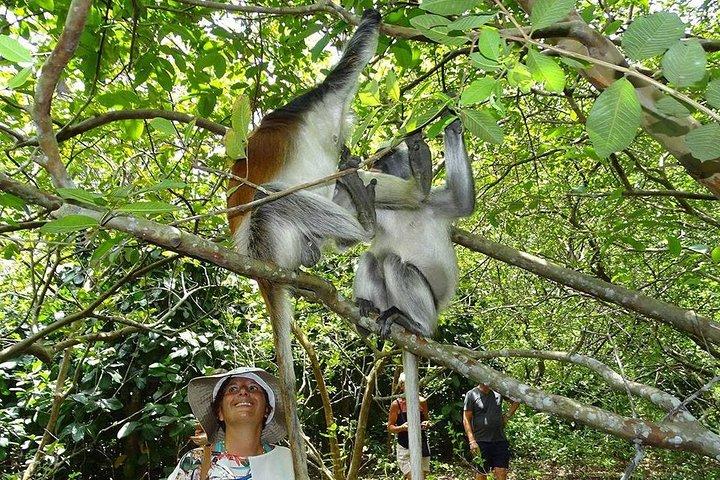 Zanzibar Jozani Jungle-Nature Walk, Zanzibar, TANZANIA