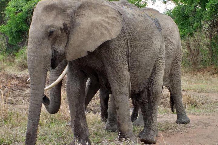 5 Days Explore Selous Game Reserve, Dar es Salaam, Tanzânia