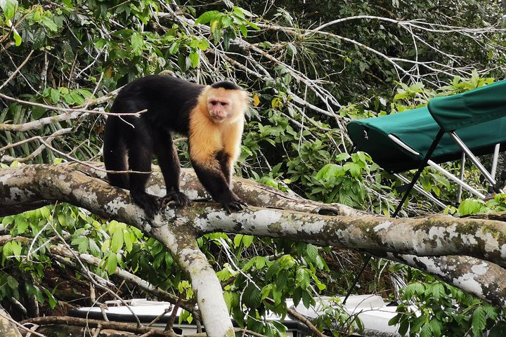Tour Gatun lake and Monkey island, Ciudad de Panama, Panama