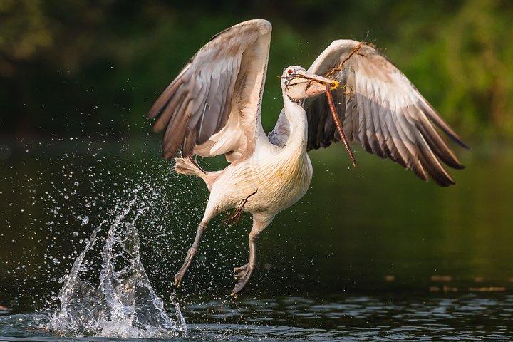 Prek Toal Birds Watchers and floating Village Cruise Tours, Siem Reap, CAMBOYA