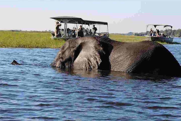 Chobe Full Day Trip, ,