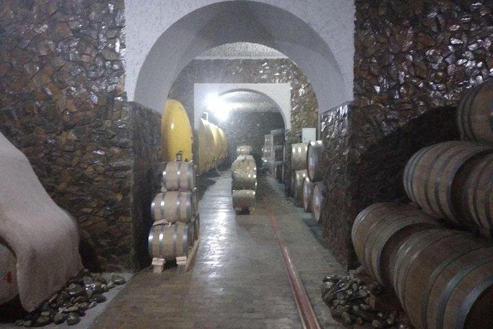 Wine tasting in Samarkand, Samarcanda, UZBEKISTAN