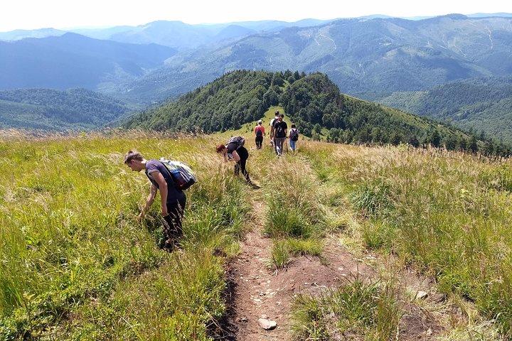 Hiking in Carpathian Mountains - Guided Walking Nature Tour., Leopolis, Ucrânia