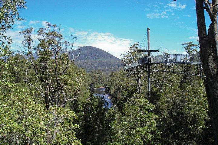 Mt Wellington and Tahune AirWalk Tour from Hobart with Roundtrip Port Transfer, Hobart, AUSTRALIA