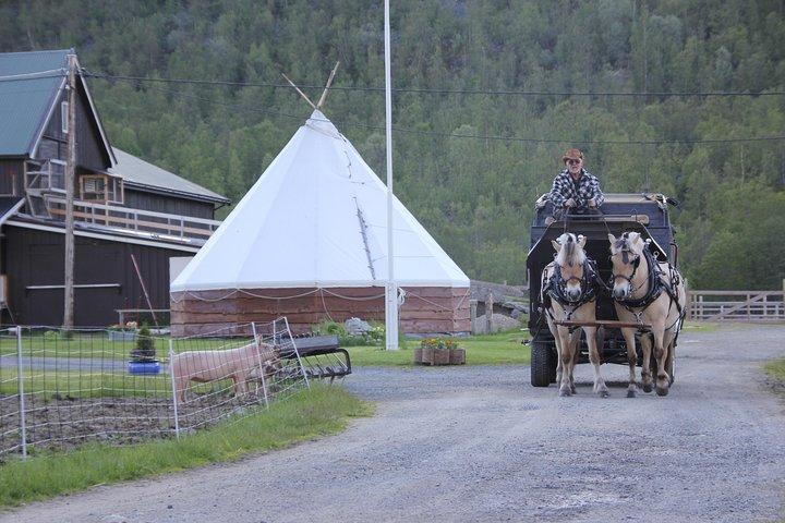 Sleigh Ride w/ Tapas Meal - Experience Arctic Farm Life, Alta, NORWAY