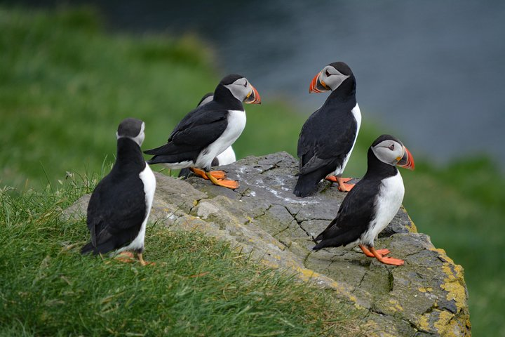 Mykines | The Puffin Paradise, ,