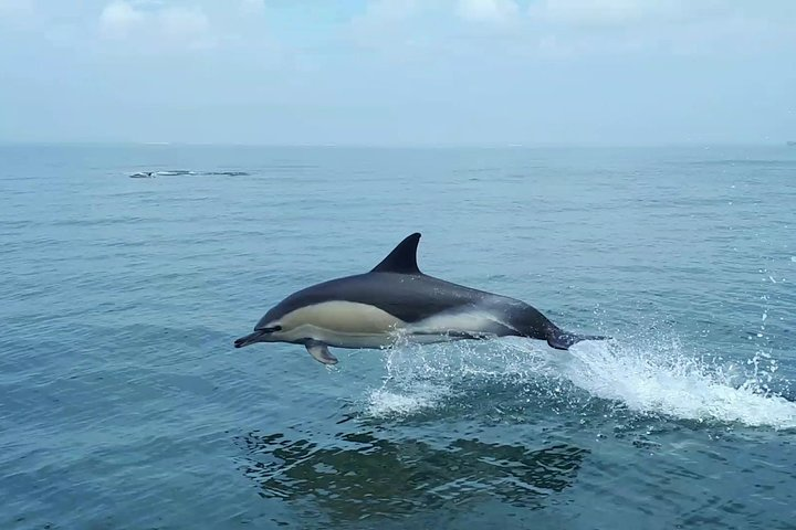 Small-Group Dolphin Watching in Lisbon, Lisboa, PORTUGAL