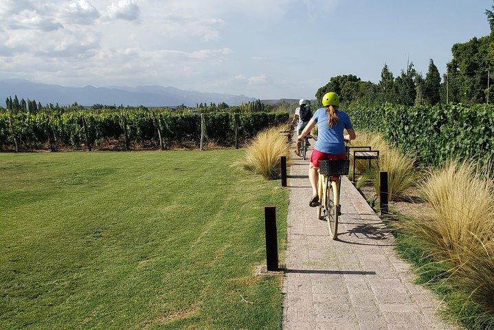 Bike, wines & lunch at Luján de Cuyo (Mendoza), Mendoza, ARGENTINA