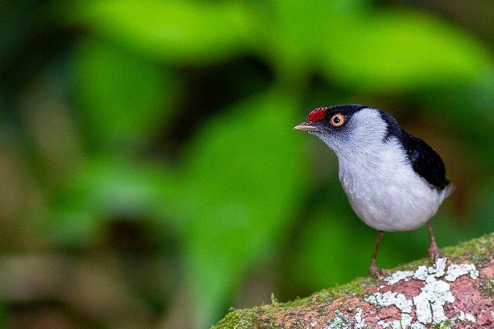 Birdwatching Tour | costumize your etinerary, Paraty, BRASIL