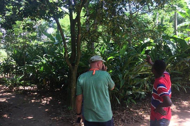 Stone Town and Spice Farm Private Tour, Zanzibar, TANZANIA